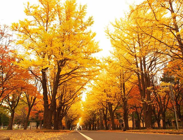 悠悠北海道のおすすめ紅葉スポット公開