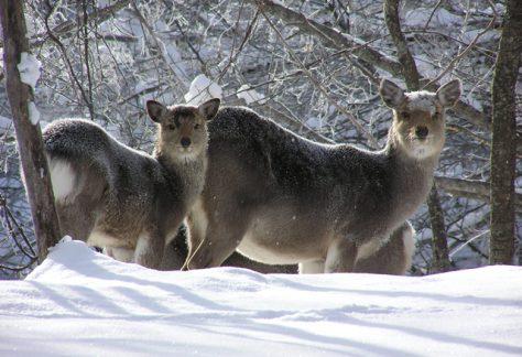 阿寒摩周国立公園