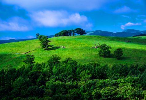 ナイタイ高原牧場